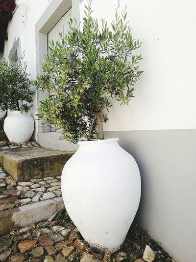 No People Day Decorative Sreet Art Plant Olive Tree The Architect - 2017 EyeEm Awards The Great Outdoors - 2017 EyeEm Awards