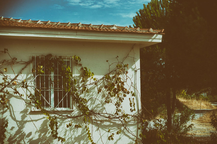 Architecture Exterior Building Exterior Day Cloud Nature Analogue Photography Film Look Vintage Sony A6000 Sky High Section Deterioration Outdoors No People Built Structure
