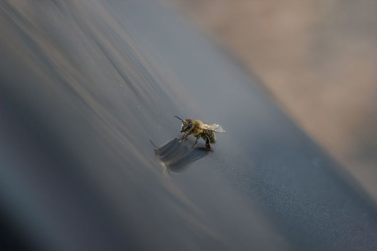 High angle view of bee