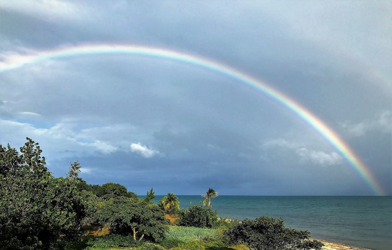 rainbow, double rainbow, beauty in nature, scenics, nature, tranquil scene, idyllic, sky, sea, day, cloud - sky, horizon over water, water, tranquility, outdoors, no people, tree, natural arch, green color, multi colored, mammal