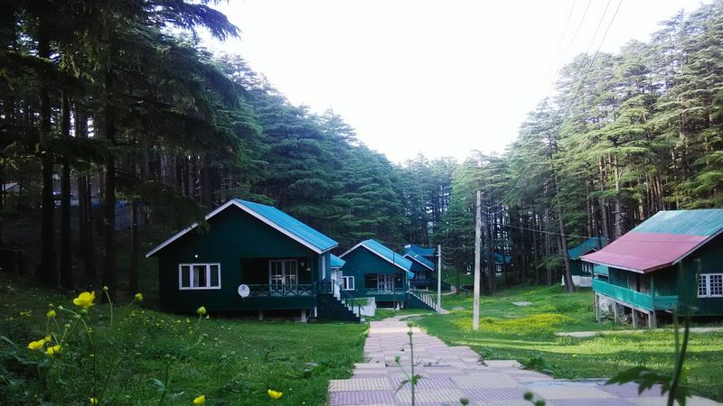Tree Green Color No People Outdoors Neighborhood Map Jammudiary Jammu And Kashmir Huts