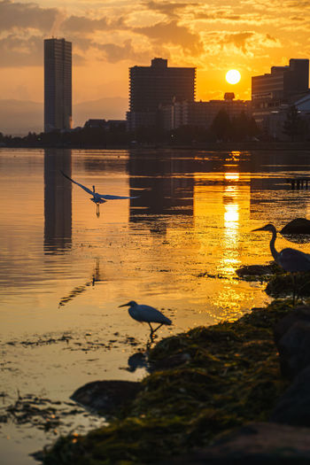 View of seagull at sunset