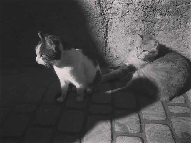 Cats Catsofinstagram Bw Blackandwhite Bw_collection BW_photography Bwlover Old Buildings Photography Photooftheday Love Architecture Streetphotography Essaouira Cat Big Cat Stray Animal Domestic Cat Kitten