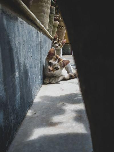 High angle portrait of cat sitting on floor