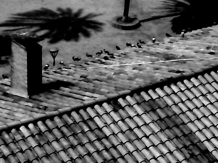 Pigeons In The Roof