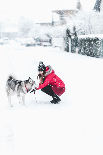 Snow Winter Cold Temperature White Color Motion Nature Pets Clothing Field Day Domestic Canine Domestic Animals Dog One Animal Animal Themes Red Mammal Land Outdoors Warm Clothing Snowing Husky
