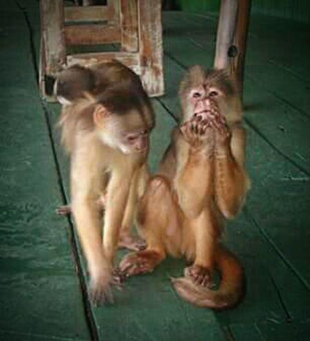 Amazon - Brazil Amazonas-Brasil Fauna Fauna, Monkey Eyeem Fauna Nature_collection EyeEm Nature Lover Naturelovers Nature_perfection Better Together