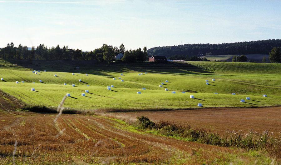 A cut field