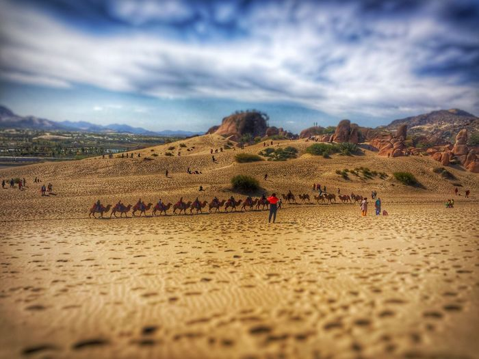 Sand Camel Riding Desert Beauty Non-urban Scene Camel Outdoors Beauty In Nature Tourism Landscape_Collection