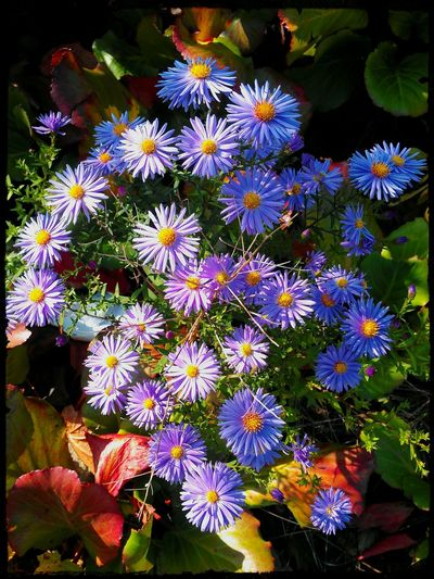 Fragility Flower Beauty In Nature Miniaster In Blue