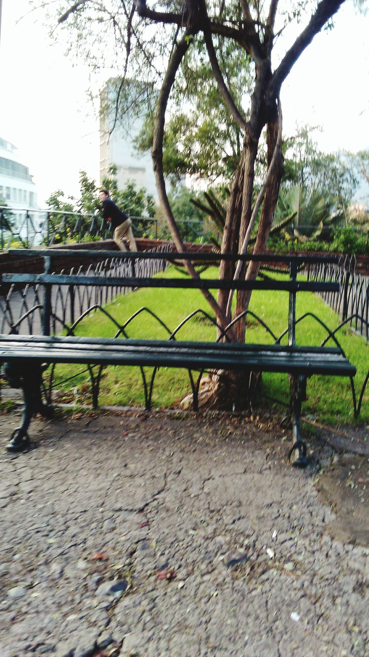 tree, fence, built structure, text, railing, architecture, branch, park - man made space, growth, western script, sky, day, nature, outdoors, tranquility, bench, no people, protection, building exterior, sunlight