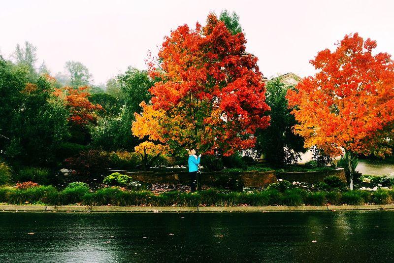 Santarosa #beauty #fall #autumn #leaves