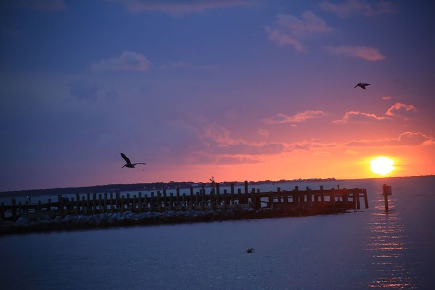 Mobile Bay Alabama Fort Morgan Ocean Clouds Pier Pelican Vertebrate Bird Sky Animal Themes Animal Sunset Animals In The Wild Animal Wildlife Water Sea Group Of Animals Beauty In Nature Flying Nature Scenics - Nature Silhouette Cloud - Sky Sun Orange Color No People