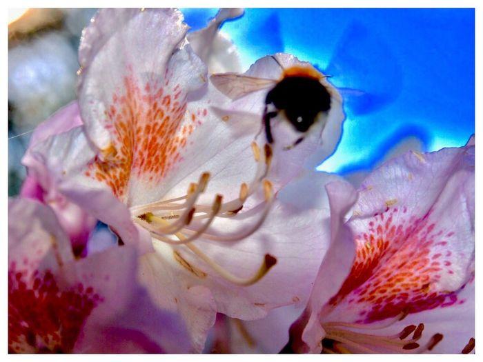 """Davon träumen nicht nur 🐝 Bienen"" ""Not Only Bees🐝dream Of It"" ""Davon Träumen Nicht Nur Bienen🐝"" Flower Petal Flower Head Fragility Beauty In Nature Nature Close-up Stamen Freshness No People Pollen Growth Animal Themes Plant Springtime Day Underwater Water Outdoors"