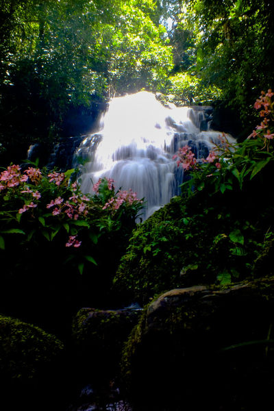 Mun dang waterfall 5th floor13 Water Waterfall Nature Beauty Plant Beauty In Nature Outdoors Flower Tree Landscape Scenics Day No People Freshness Sky Travel The Week On EyeEm EyeEmNewHere Wild Flowers Snapdragon Freshness Forest Beauty In Nature Rock - Object Vacations