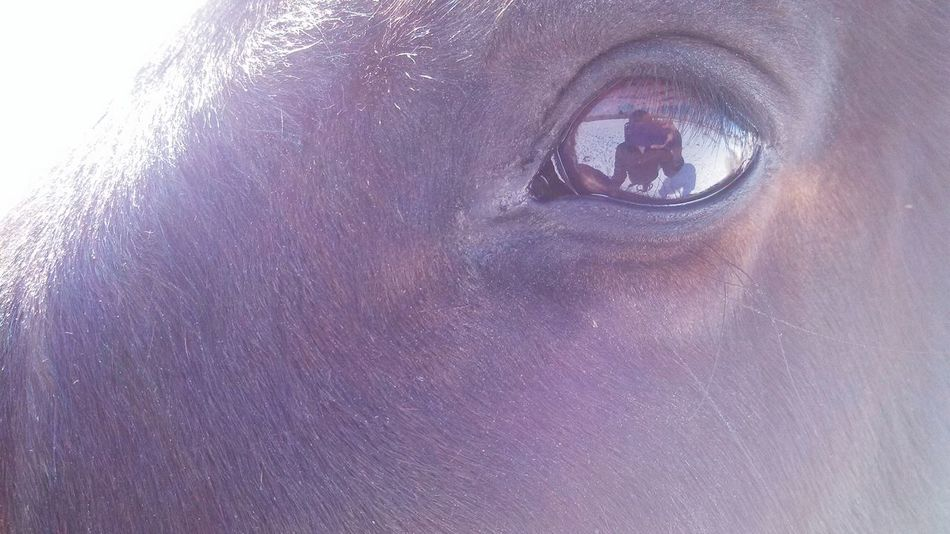 My babe. Liz The Mare Horse Horses Eye Horse Photography  Eyes Reflection Reflections Eyes Are Windows Into Your Soul