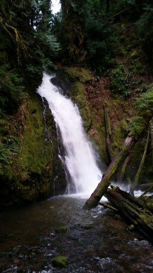Hemlock falls, lake in the woods, Or.