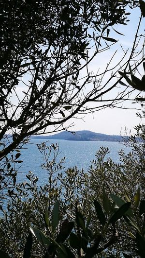 Lago di Bolsena Tree Water Branch Flower Sky Close-up