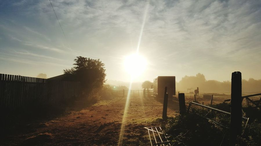 Work Field Horse Horse Box Sunrise Morning Dew Tree Sky Outdoors Bright Beauty In Nature Track