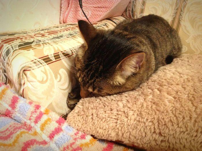 こたさん、それ、 ごめん寝…? Cat ごめん寝 もふもふ First Eyeem Photo