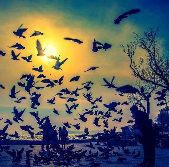 Hayat kısa,kuşlar uçuyor!..