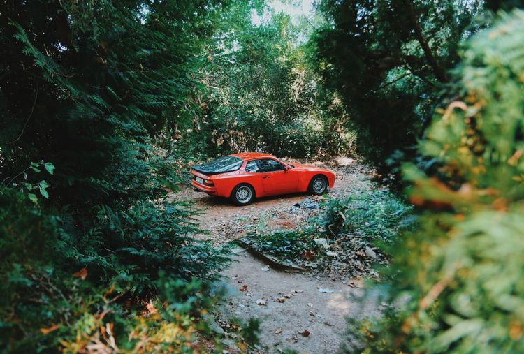 Automobile Hungary Porsche Tranquility Automotive Beauty In Nature Car Forest Green Color Growth Nature No People Outdoors Red Color Sportscar Tranquil Scene Transportation Tree