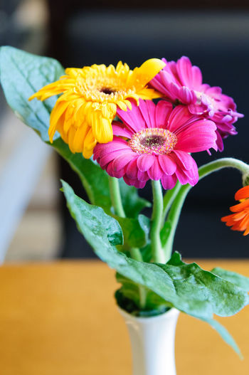 Colour flowers in vase Beauty In Nature Blooming Blossom Botany Bouquet Bunch Of Flowers Close-up Day Flower Flower Head Focus On Foreground Fragility Freshness Green Color Growth In Bloom Leaf Nature No People Petal Pink Color Plant Selective Focus Stem Yellow