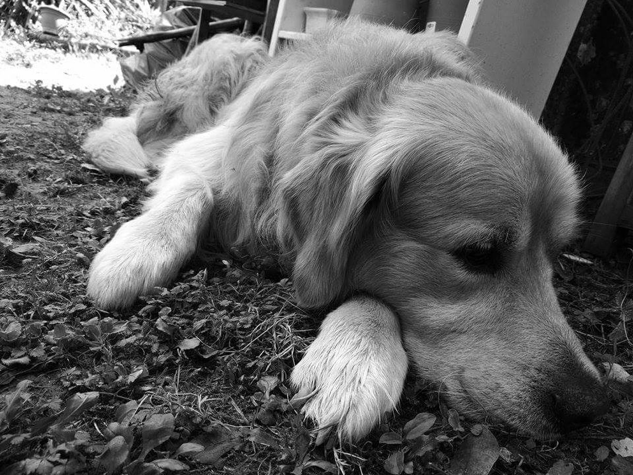 dog, pets, domestic animals, animal themes, mammal, one animal, close-up, no people, day, outdoors