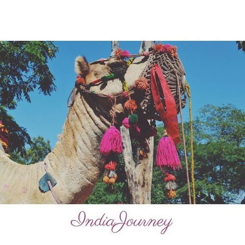 Guess what day is it ? IndiaJourney Camel