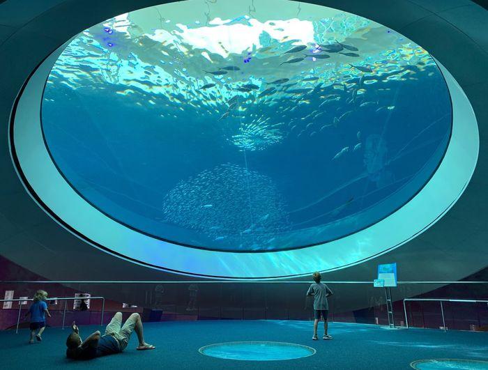 View of fish swimming in aquarium