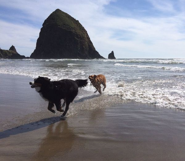 Dogs Soaking up a Beautiful Day. Check This Out IPhoneography Dogs Cannon Beach Oregon Coast Summertime CreativePhotographer Nature_collection EyeEm Best Shots
