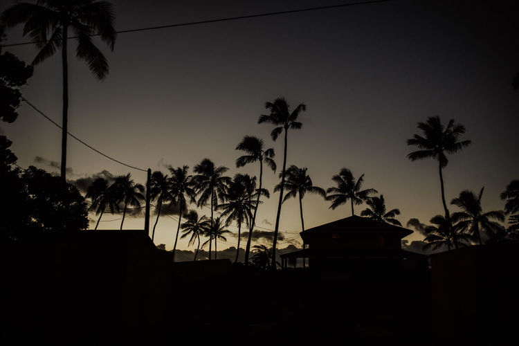 Silhouette palm trees by building against sky at sunset