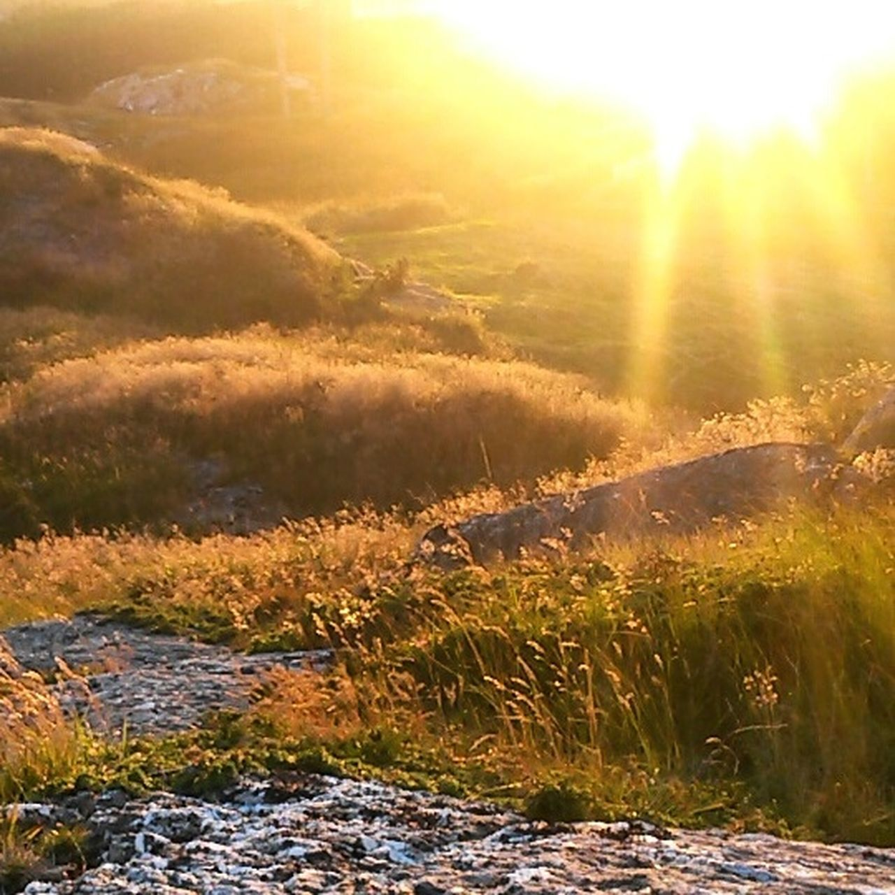 sunbeam, nature, sunlight, lens flare, grass, sunset, beauty in nature, sun, landscape, outdoors, scenics, no people, day, sky
