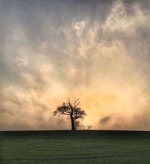 My favourite tree..... Tree Nature Sky Landscape Cloud - Sky Outdoors Single Tree Lone Early Morning IPhone Dramatic Sky Taking Photos