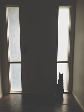 Window Door Indoors  Hallway Cat Shadows & Lights Alone Cat Lovers Waiting