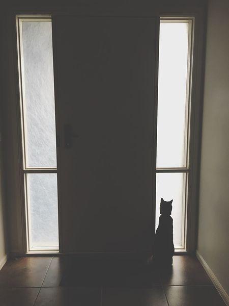 Window Door Indoors  Hallway Cat Shadows & Lights Alone Cat Lovers Waiting