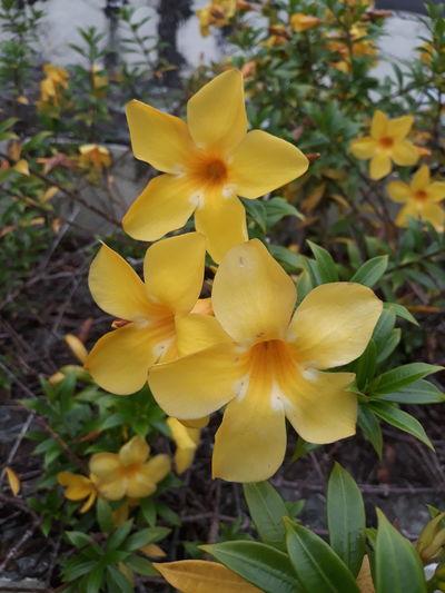 EyeemPhilippines Flower Head Flower Yellow Leaf Petal Close-up Plant Flowering Plant Blossom