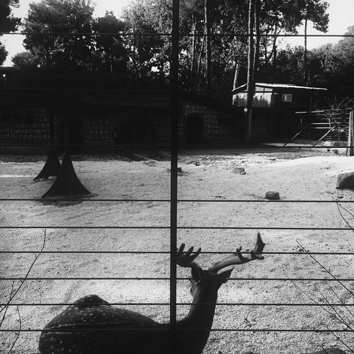 Worldpressphoto Black & White EyeEm Best Shots Alipix Iran The Week Of Eyeem Zoo ©Ali Nazariatjoo