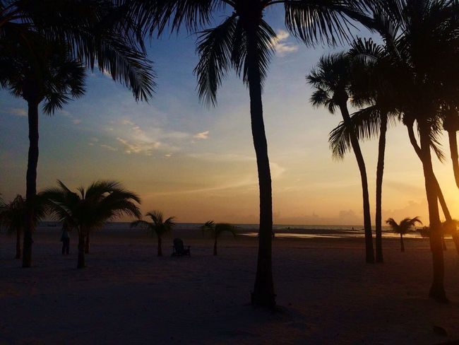 Palm Tree Sea Beach Sunset Horizon Over Water Tree Scenics Beauty In Nature Water Sky Tranquility Tranquil Scene Nature Sand Tree Trunk Outdoors No People Vacations Palm Frond Day Fort Myers Palms Florida