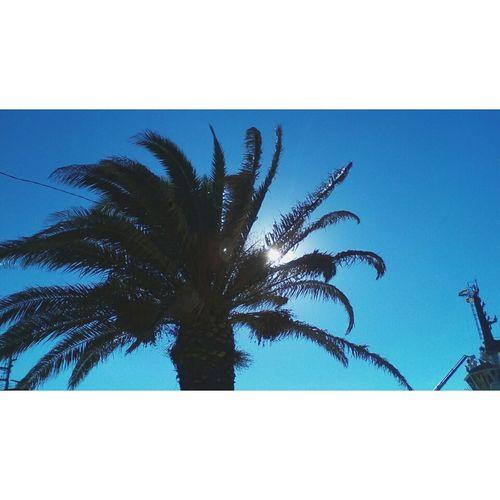 In der Sonne Kroatiens Nature Clear Sky Palm Tree Silhouette First Eyeem Photo