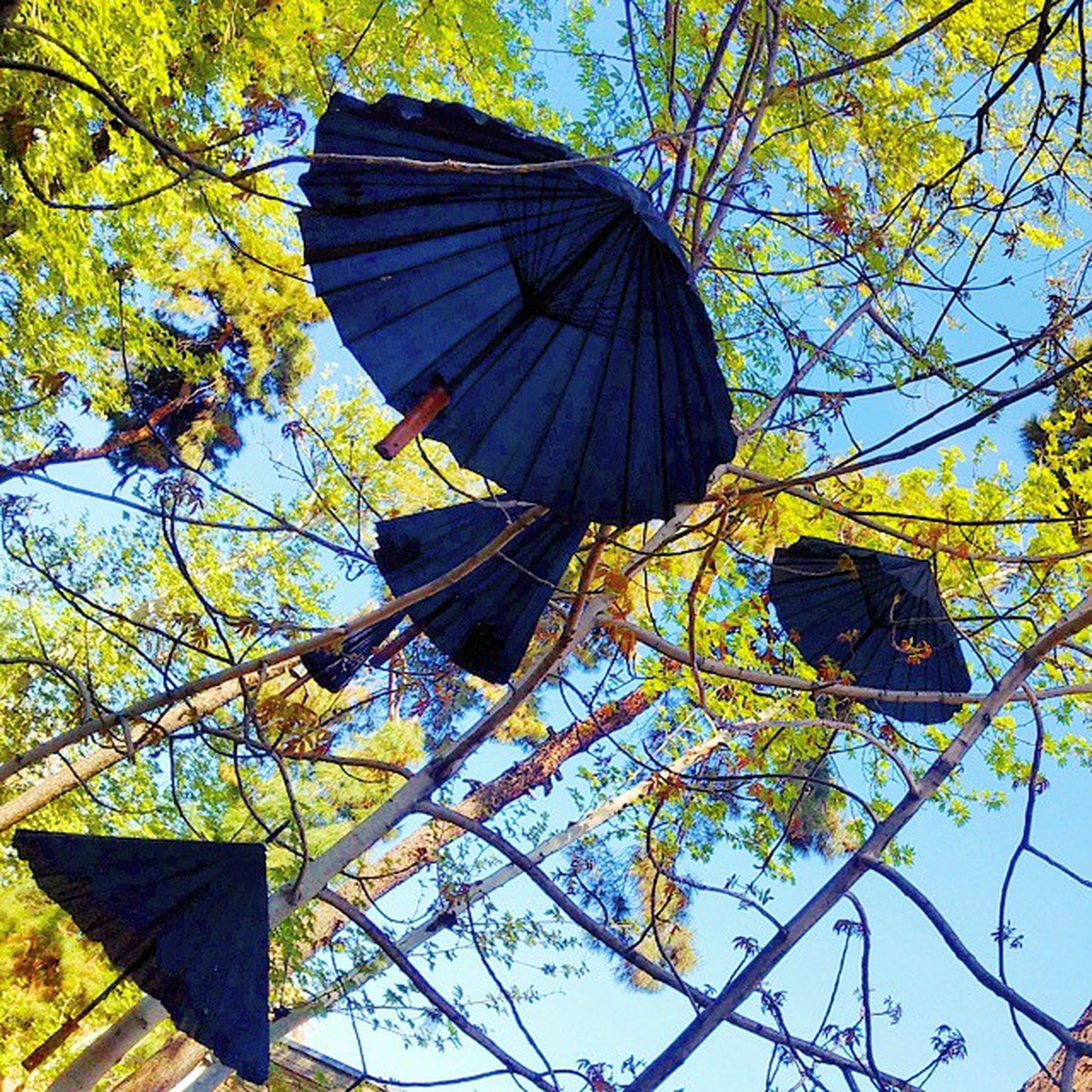low angle view, tree, branch, leaf, sky, growth, clear sky, nature, autumn, day, outdoors, no people, yellow, built structure, hanging, sunlight, blue, directly below, building exterior, architecture