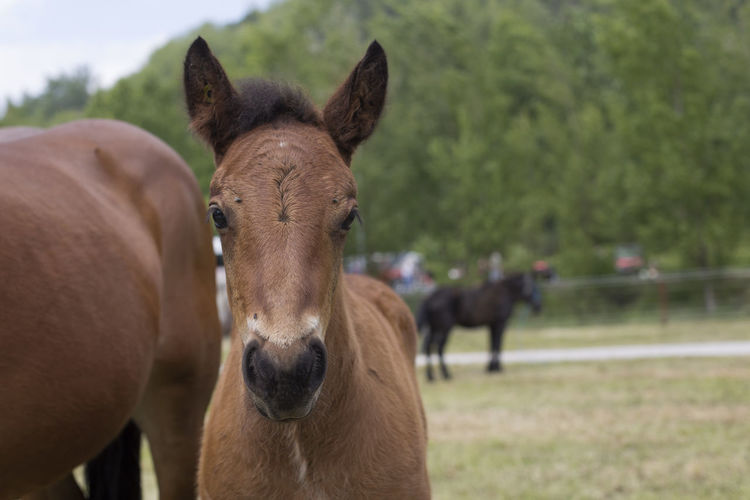 Portrait of horse in field