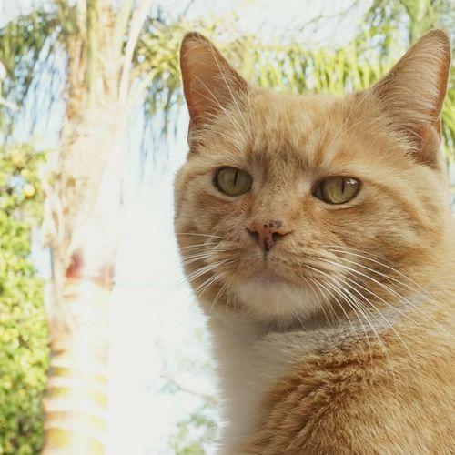 The Portraitist - 2016 EyeEm Awards Hello World Relaxing Clover The Queen Bee Portrait Cat Cat Lovers