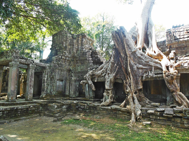 Ancient Architecture Ancient Civilization Ancient Ruins Architecture Cultures Eyeem Cambodia EyeEm Nature Lover Khmer Empire Nature Taking Over Nature Taking Over Again Old Ruin Places To Be Ta Prohm Tetrameles Tomb Raider  Tourism Travel Travel Destinations Vacations