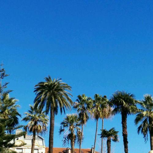 palmier du jour Ceci N'est Pas Un Palmier