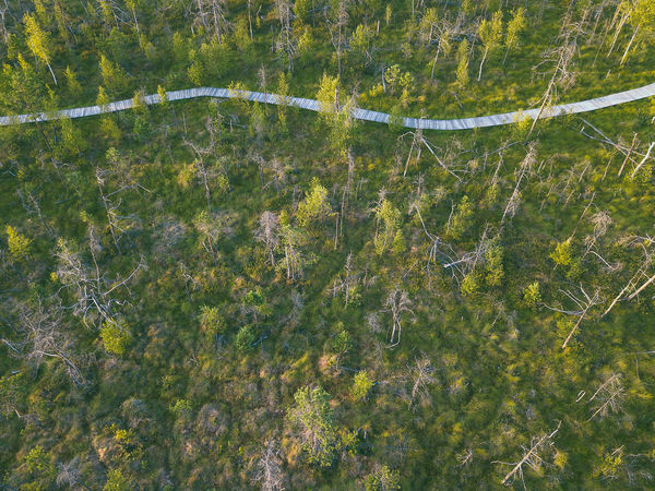 Swamp, drone aerial view. Kaunas county, Lithuania DJI Mavic Pro DJI X Eyeem Drone  Kaunas County Lietuva Lithuania Nature Nature Swamp Aerial Aerial View Backgrounds Beauty In Nature Day Dubrava Europe Full Frame Green Color Growth High Angle View Land Lithuania Travel Mavic Mavic Pro Nature No People Outdoors Plant Scenics - Nature Tranquil Scene Tranquility Tree Water Waterfront