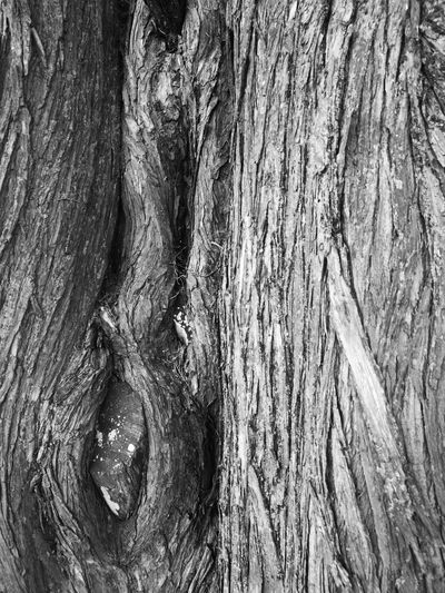 B&w Photo B&w Monochrome Photograhy Monochrome Collection B&W Collection B&WPhoto B&W Photo Lifestyle Tree Trunk Textured  Wood - Material Tree Close-up No People Wood Grain Tranquility In Nature Blackandwhite Photography Texture Arbre écorce La Bernerie En Retz Loire-atlantique France🇫🇷 Huawei P9. Photography