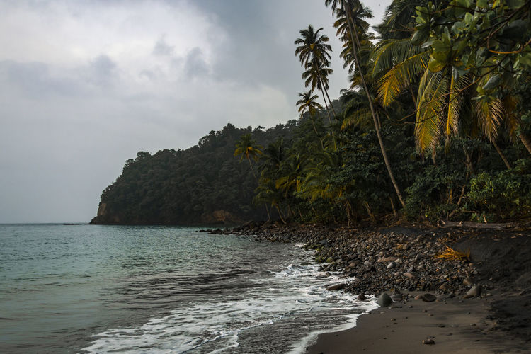 A rainy day in the North of Martinique Island Martinique Island Martinique French West Indies Fwi Island Islandlife Tropical Climate Caribbean Caribbean Island EyeEm Selects Sea Water Sky Scenics - Nature Beauty In Nature Tranquil Scene Palm Tree No People Coconut Palm Tree Idyllic Beach Cloudy Day