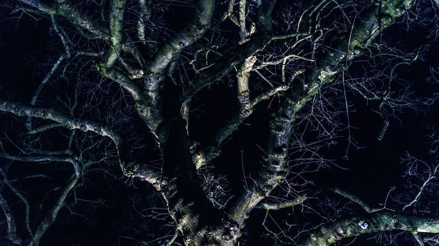 Full frame shot of tree in forest at night