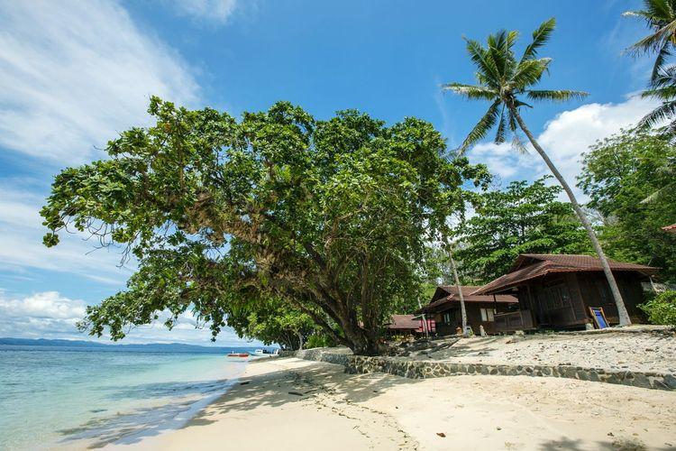 Tree Beach Sand